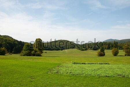 緑 森林 風景 空 ツリー ストックフォト © dinozzaver