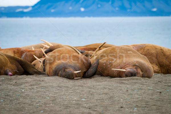 берега Норвегия пляж пейзаж тело снега Сток-фото © dinozzaver