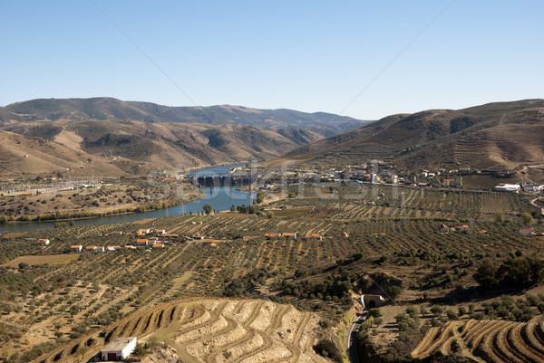 Vineyards at Douro river valley, Portugal Stock photo © dinozzaver