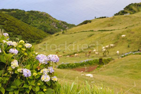 Panorama verde isola cielo Foto d'archivio © dinozzaver
