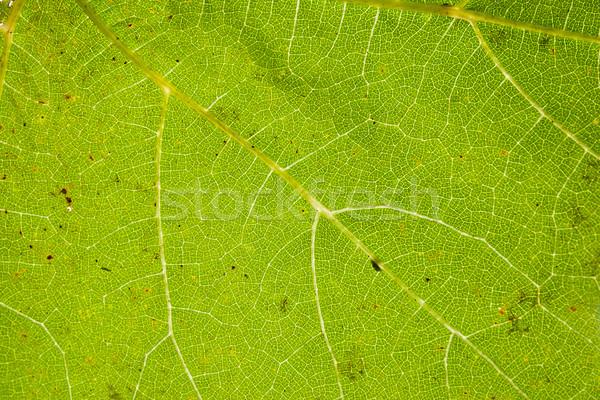 Zöld levél közelkép véna struktúra fű absztrakt Stock fotó © dinozzaver