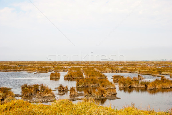 Marsh with water and grass of rio Averio, Portugal Stock photo © dinozzaver