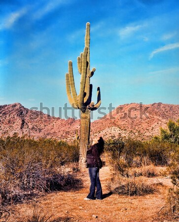Arizona Saguaros Stock photo © diomedes66