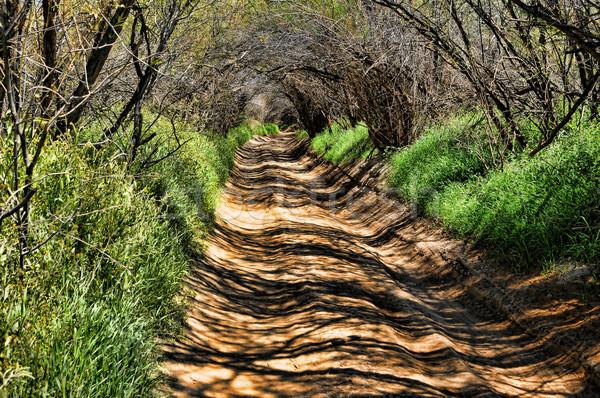 бесконечный зеленый туннель дороги пути ведущий Сток-фото © diomedes66