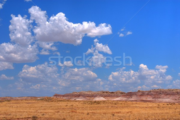 描いた 砂漠 風光明媚な 風景 古代 ツリー ストックフォト © diomedes66