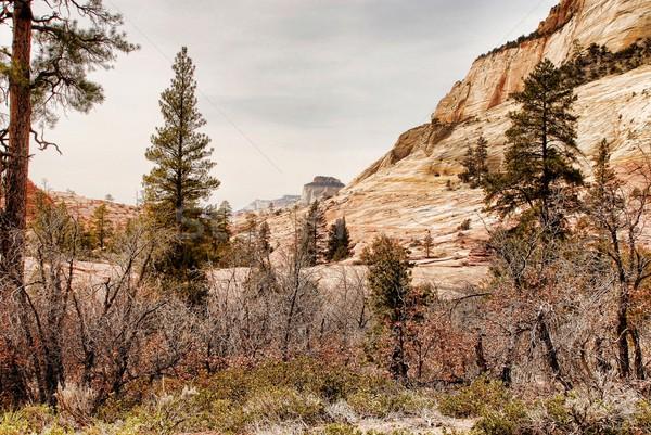 Park déli Utah természet hegy utazás Stock fotó © diomedes66