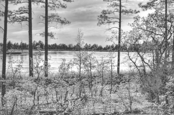 лес озеро закат монохромный воды древесины Сток-фото © diomedes66