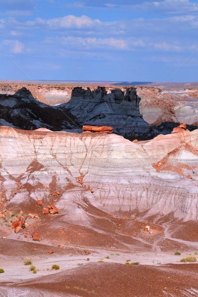 лес Аризона чужеродные пустыне пейзаж текстуры Сток-фото © diomedes66