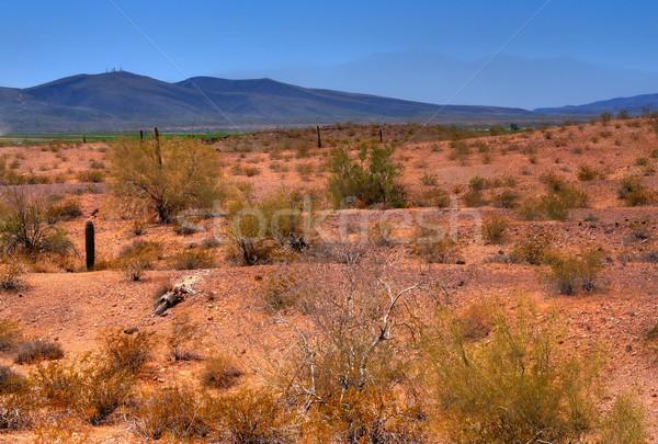 Arizona desierto líder árbol puesta de sol paisaje Foto stock © diomedes66