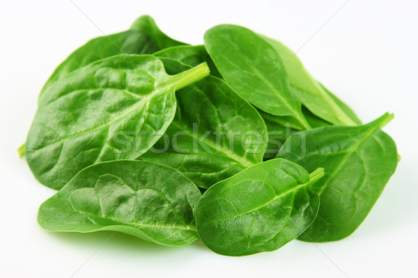 Young spinach Stock photo © Dionisvera