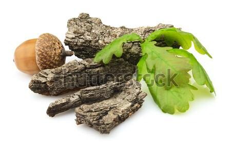 Kory zielone pozostawia nasion naturalnych odizolowany Zdjęcia stock © Dionisvera
