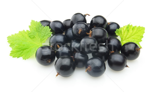 Blackcurrant with leaves Stock photo © Dionisvera