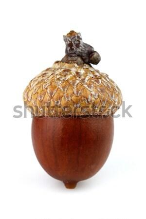 Um secas bolota comida fruto Foto stock © Dionisvera