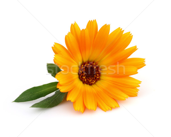 Marigold with leaves Stock photo © Dionisvera