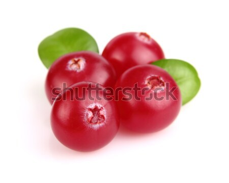 Berries of cranberry Stock photo © Dionisvera