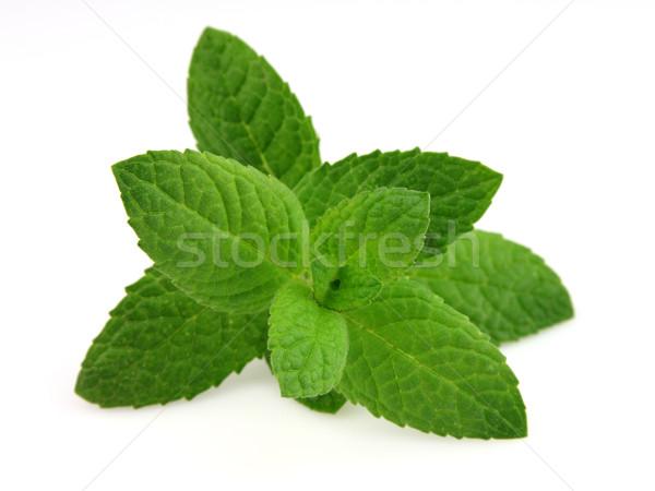 Taze yeşil tıp sağlıklı baharat ot Stok fotoğraf © Dionisvera