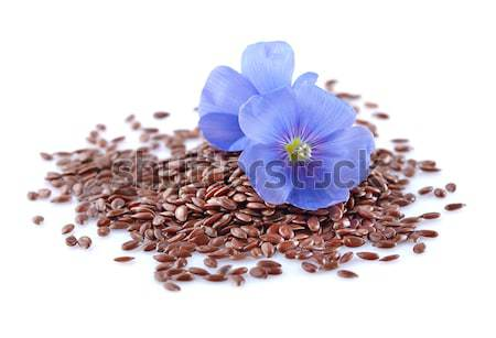 Flax seeds with flower Stock photo © Dionisvera
