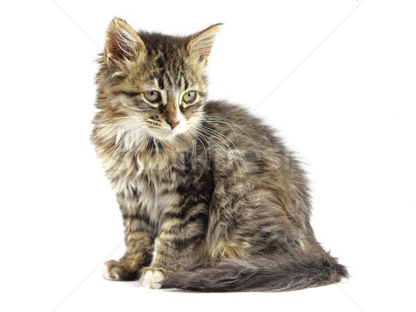 Belle kitty animaux jeunes animaux sweet Photo stock © Dionisvera