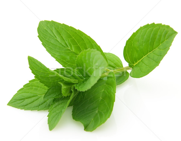 Mint Stock photo © Dionisvera