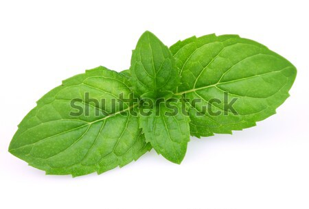 Yaprakları nane doğa yeşil tıp Stok fotoğraf © Dionisvera
