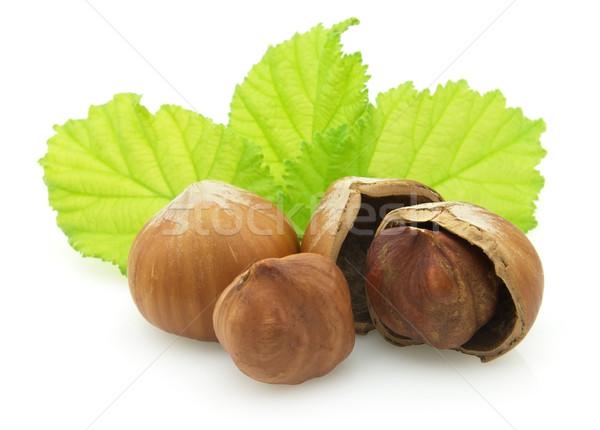 Hazelnuts Stock photo © Dionisvera