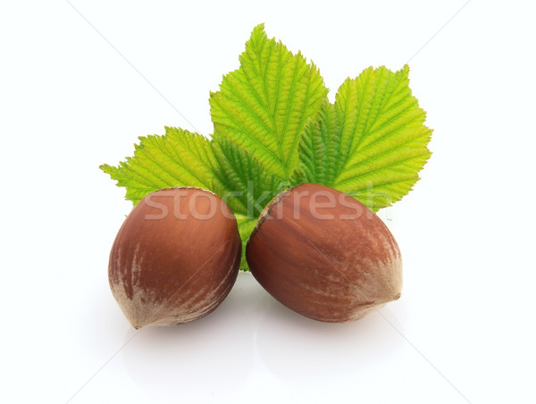 Two hazelnuts with leaves Stock photo © Dionisvera