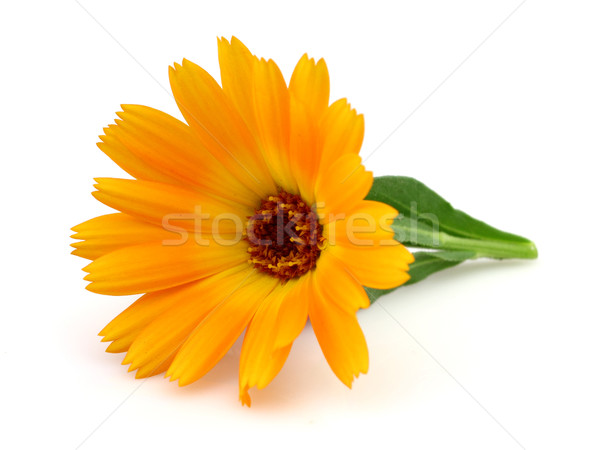 Marigold in closeup Stock photo © Dionisvera