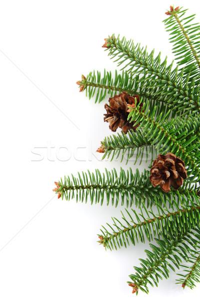 Foto stock: Cone · verde · branco · natal · férias · fresco