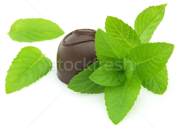 Candy with fresh mint Stock photo © Dionisvera