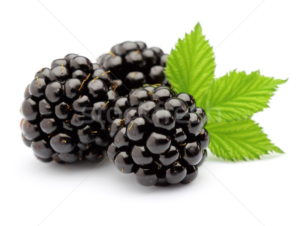 BlackBerry laisse fruits santé groupe sweet Photo stock © Dionisvera