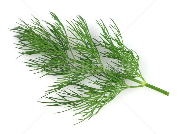 ág közelkép természet növény fehér friss Stock fotó © Dionisvera