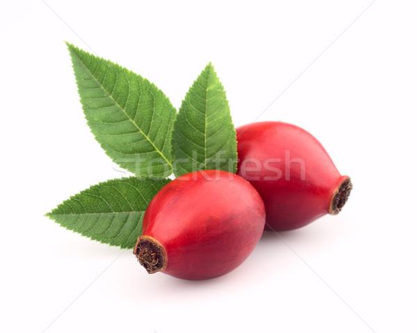 Deux chien rose Berry laisse alimentaire Photo stock © Dionisvera