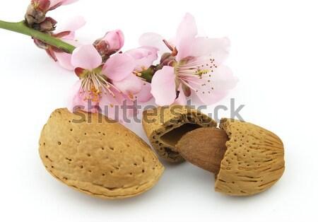 Rose fleurs blanche alimentaire laisse Photo stock © Dionisvera