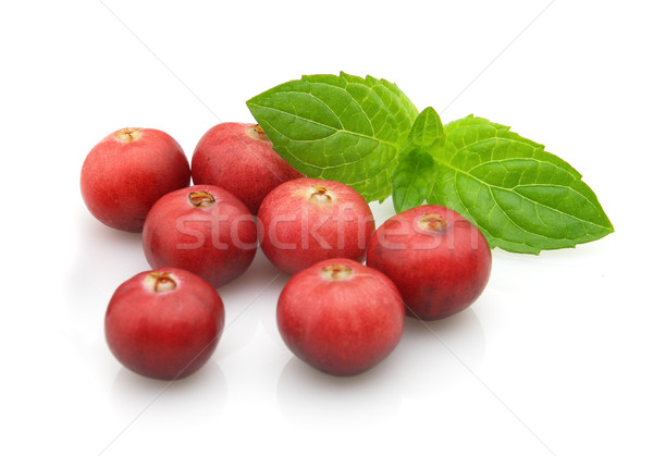 Berry of cranberry with leaves of mint Stock photo © Dionisvera