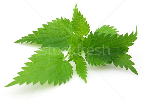 Laisse nature feuille vert médecine usine Photo stock © Dionisvera