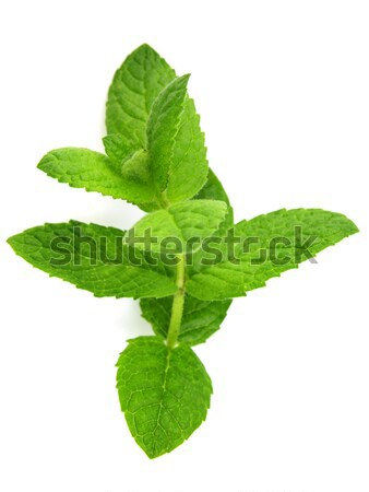 Branch of mint Stock photo © Dionisvera