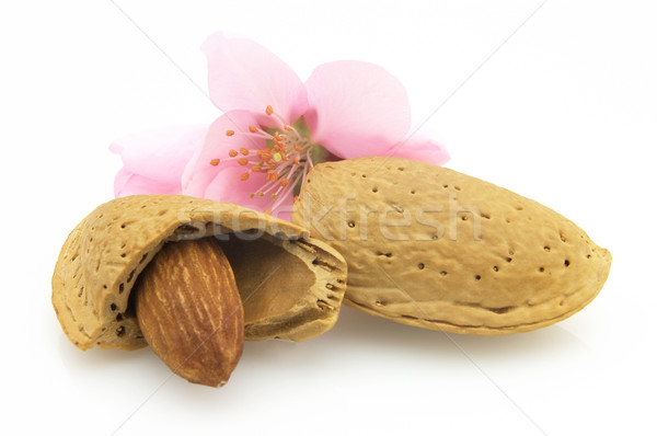 Stock photo: Nuts with flowers