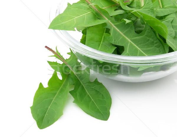 Pitypang levelek saláta növény fehér edény Stock fotó © Dionisvera