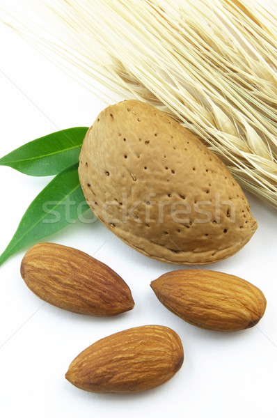 Almond with wheat Stock photo © Dionisvera