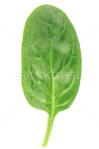 Leaf of spinach Stock photo © Dionisvera