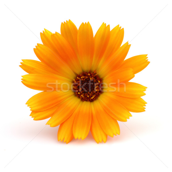 Beauté médecine usine jaune semences macro Photo stock © Dionisvera