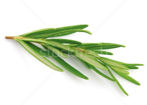 Rosemary spice Stock photo © Dionisvera