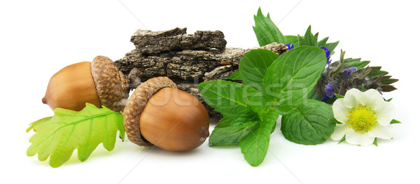 Medicinal herbs Stock photo © Dionisvera
