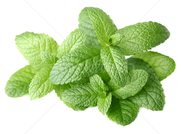 Fresh mint on a white background Stock photo © Dionisvera