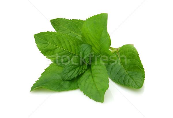 Friss menta fehér zöld gyógyszer növény Stock fotó © Dionisvera