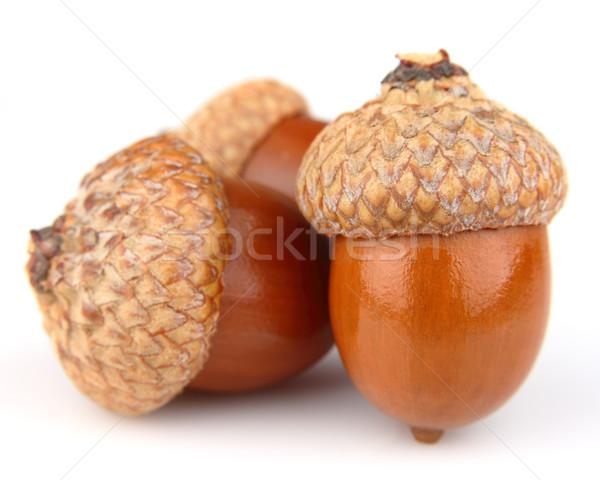 Dried acorns Stock photo © Dionisvera