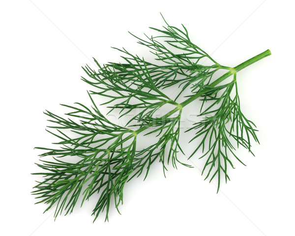 Twig of dill Stock photo © Dionisvera