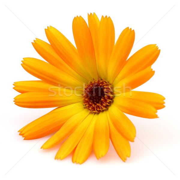 Médecine usine jaune semences macro saine Photo stock © Dionisvera