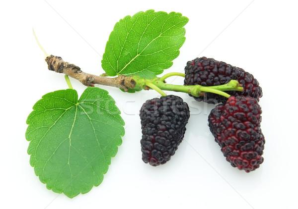 Mulberry Stock photo © Dionisvera