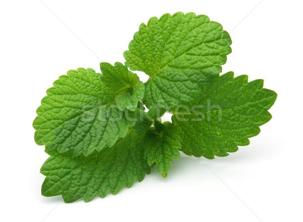 свежие белый зеленый медицина Spice трава Сток-фото © Dionisvera